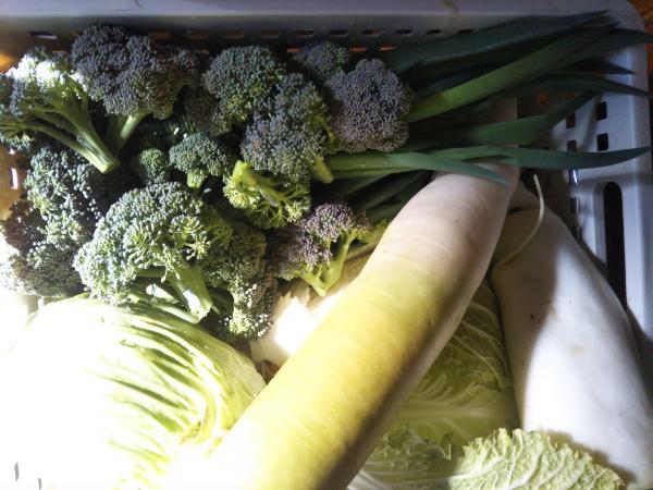 お野菜がいっぱい!